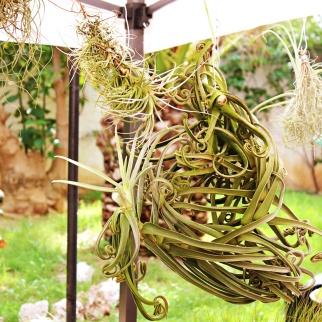 Bromeliaplant